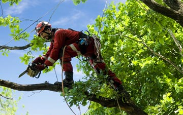 find trusted rated Enfield tree surgeons