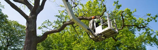 Enfield tree surgery services