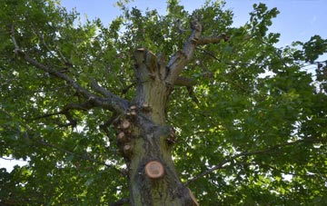 what is Enfield tree surgery?